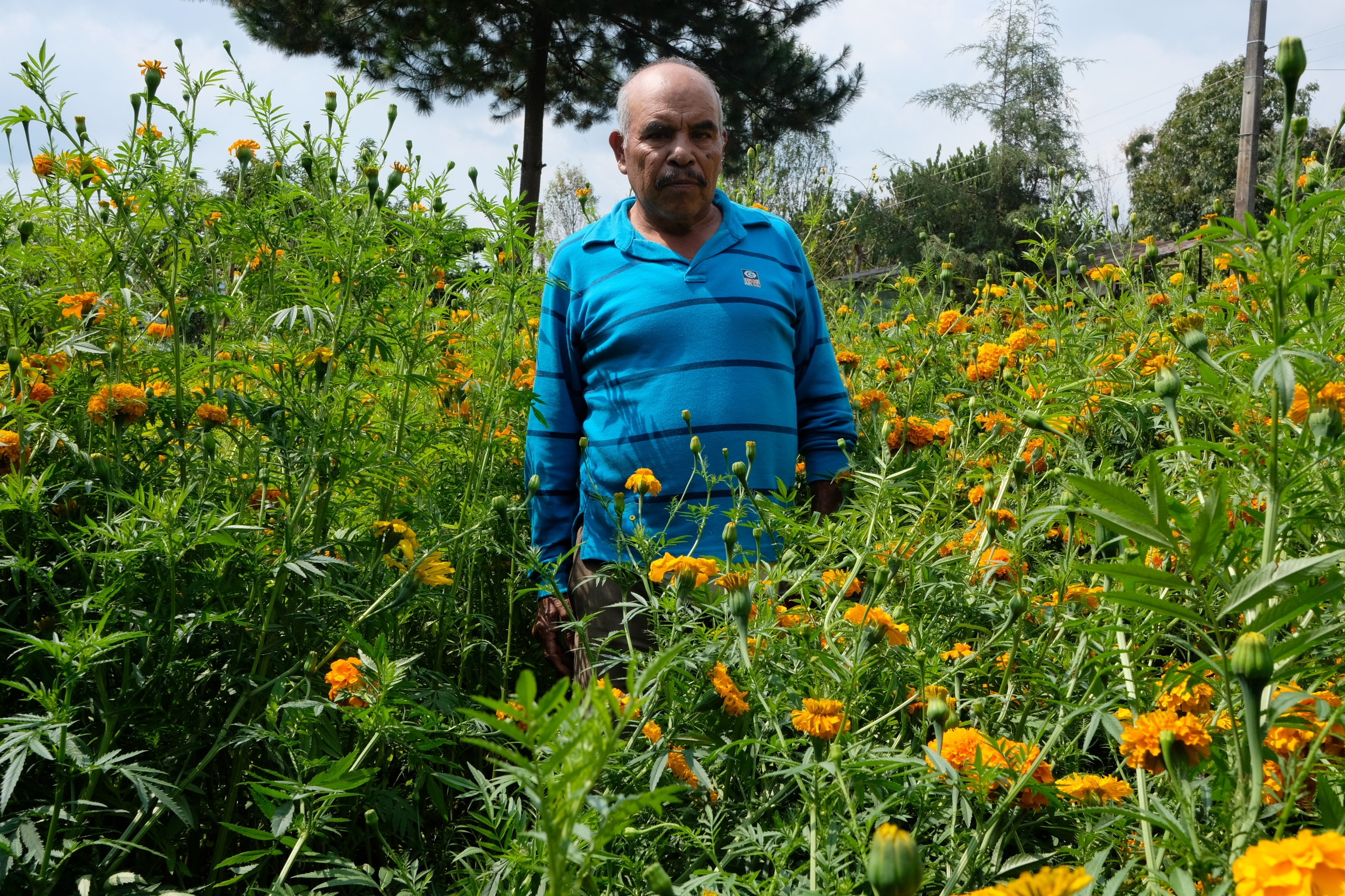 Lucio Alva Pastrana stands in his small parcel of marigold flowers. He says the price is so slow this year they're practically worthless.