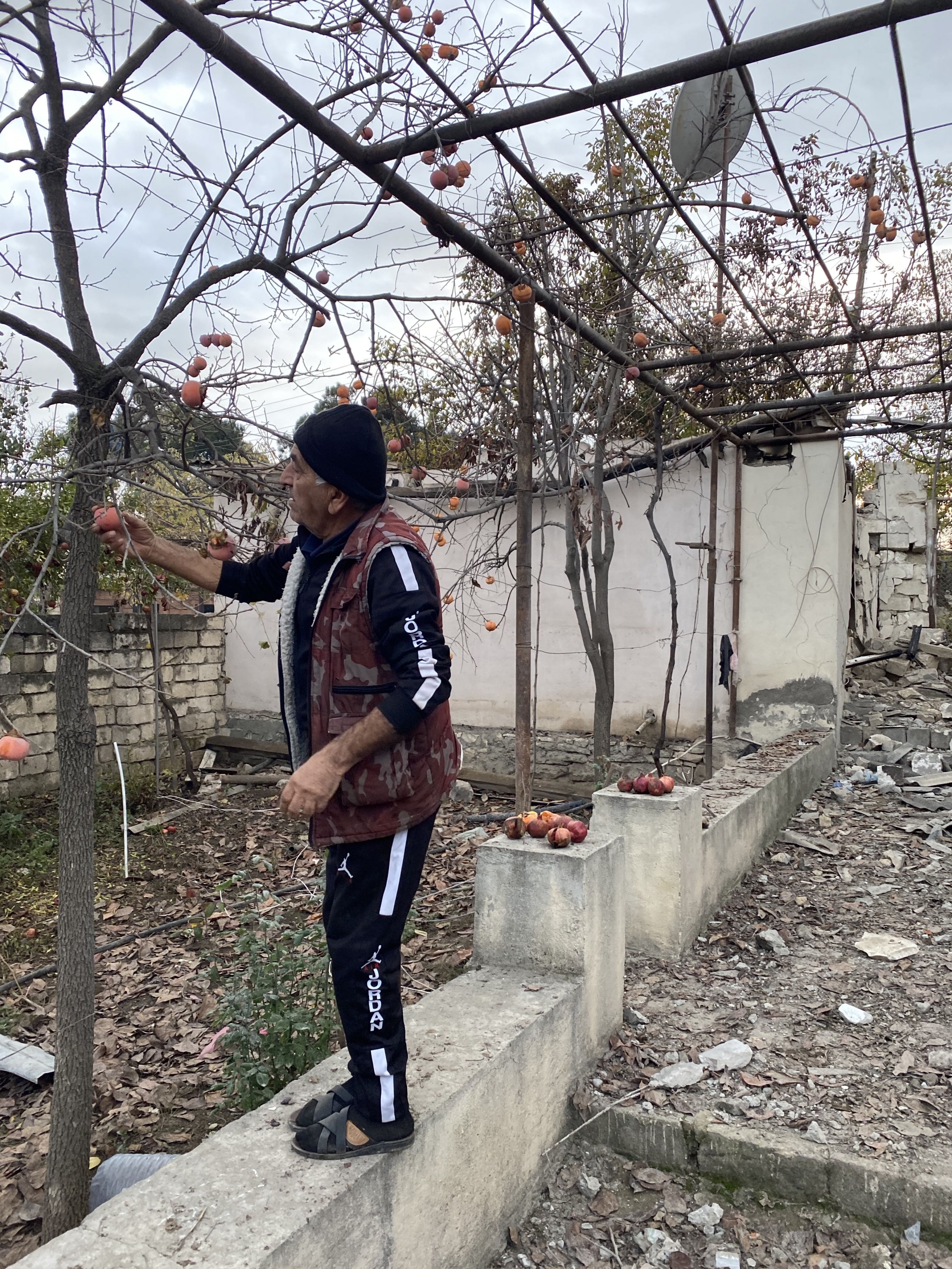 Levitan Danielyan, 68, picks some persimmons from his garden in the Armenian town Martuni around the wreckage from a nearby shelling.