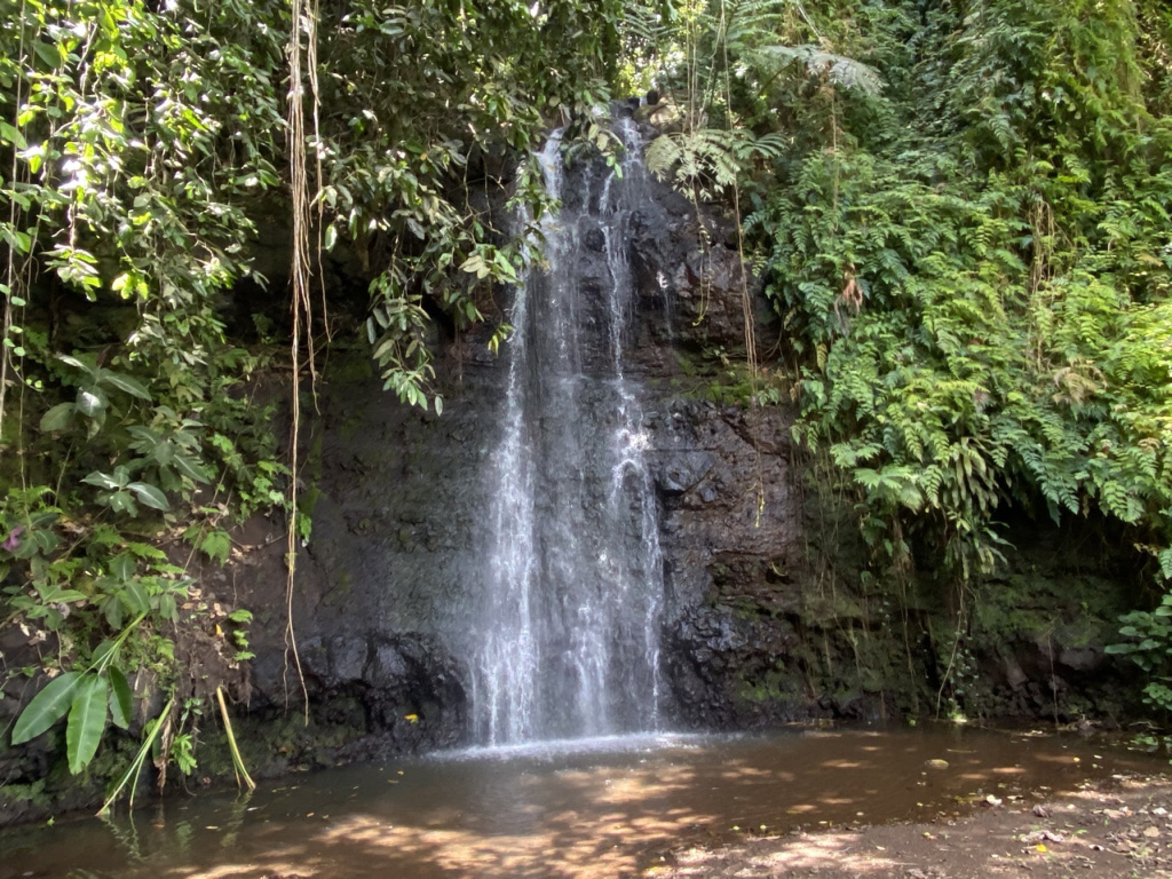 A waterfall in Tahiti.