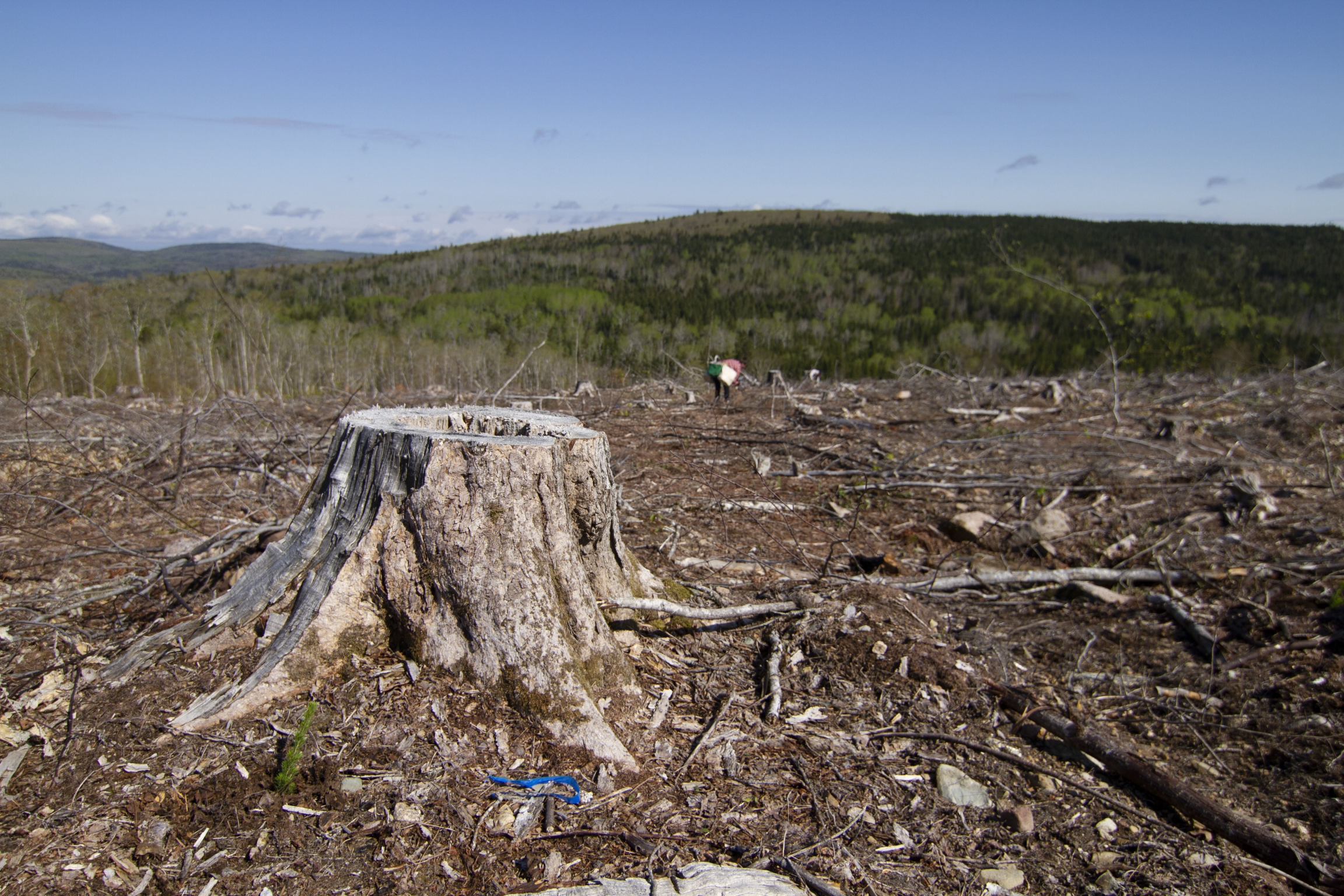 Much of the Maritimes forests are clear cut for timber sales. Community Forests International wants to break that cycle of forest management and provide landowners with an alternative way of getting income from their woods through carbon offsets.