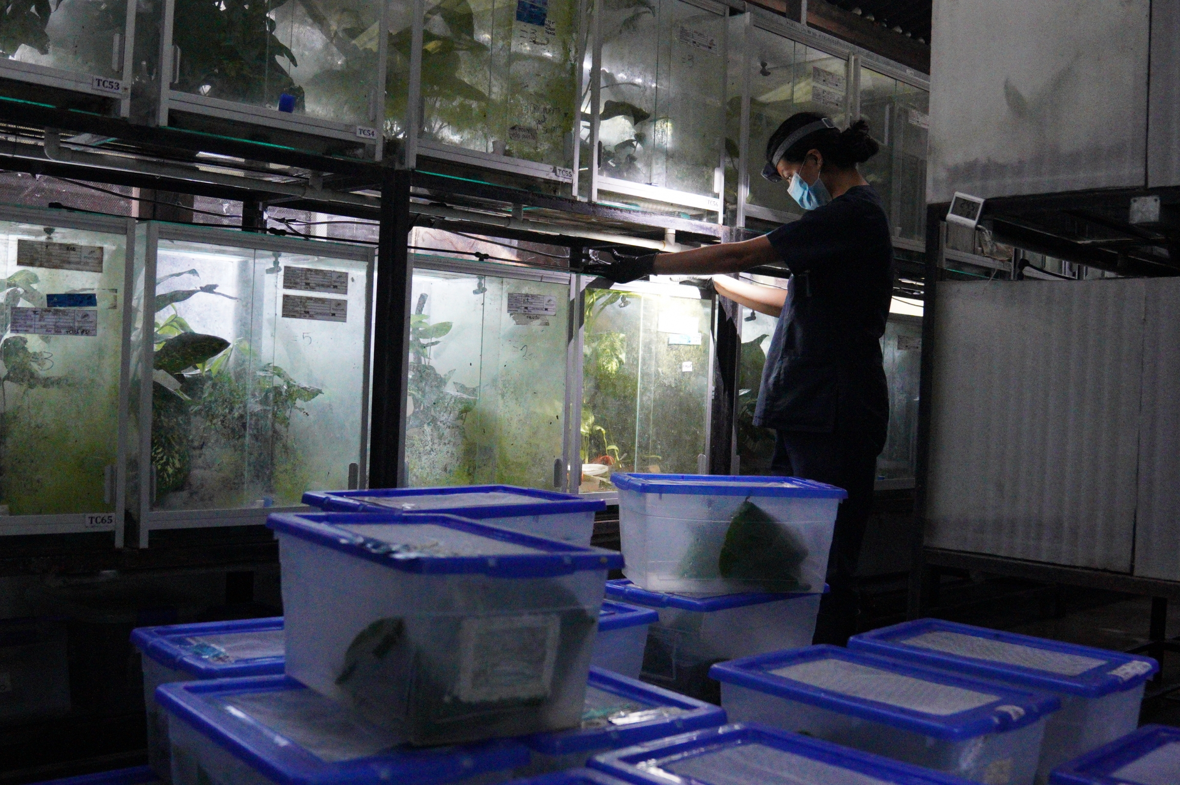 Glass cases known as terrariums hold the frogs.