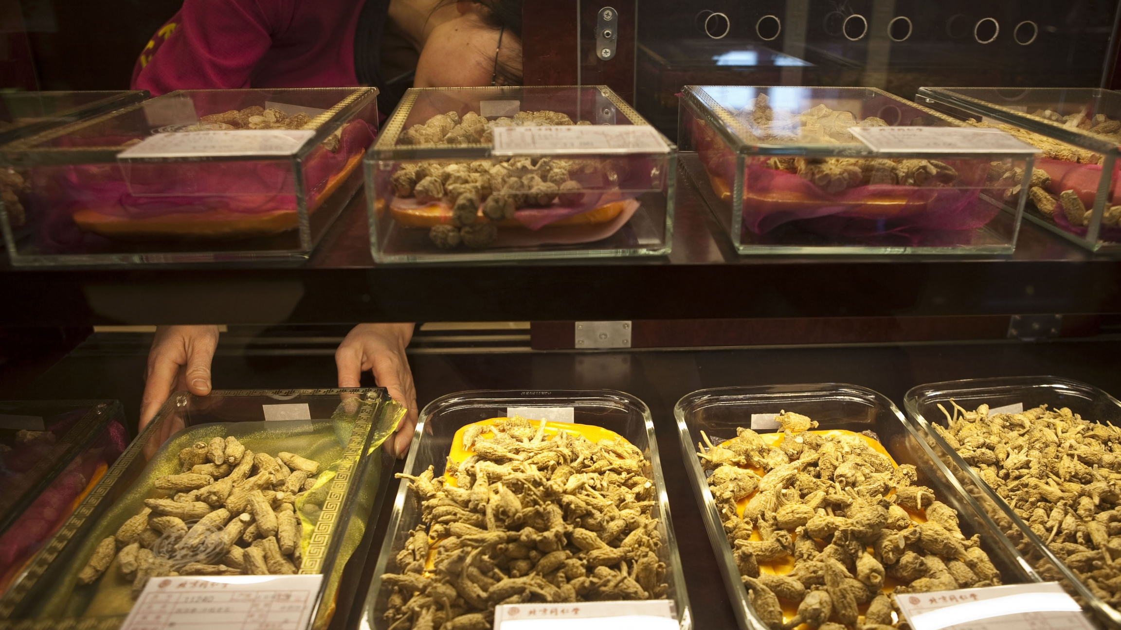 A worker arranges yellow ginseng displays behind glass cases