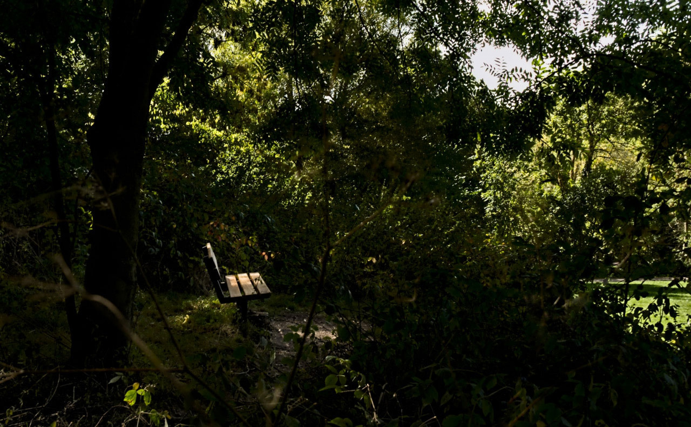 A single wooden bench is shown surrounded by trees and looking out to where bright light is showning.