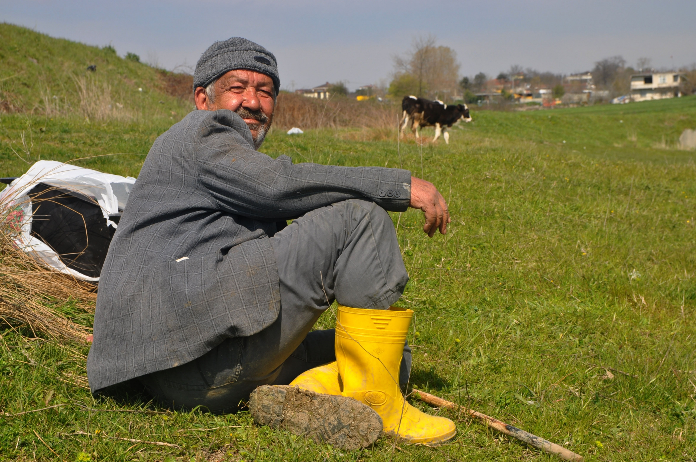 A man wearing a suit and yellow boots sits on the grass near grazing cows.