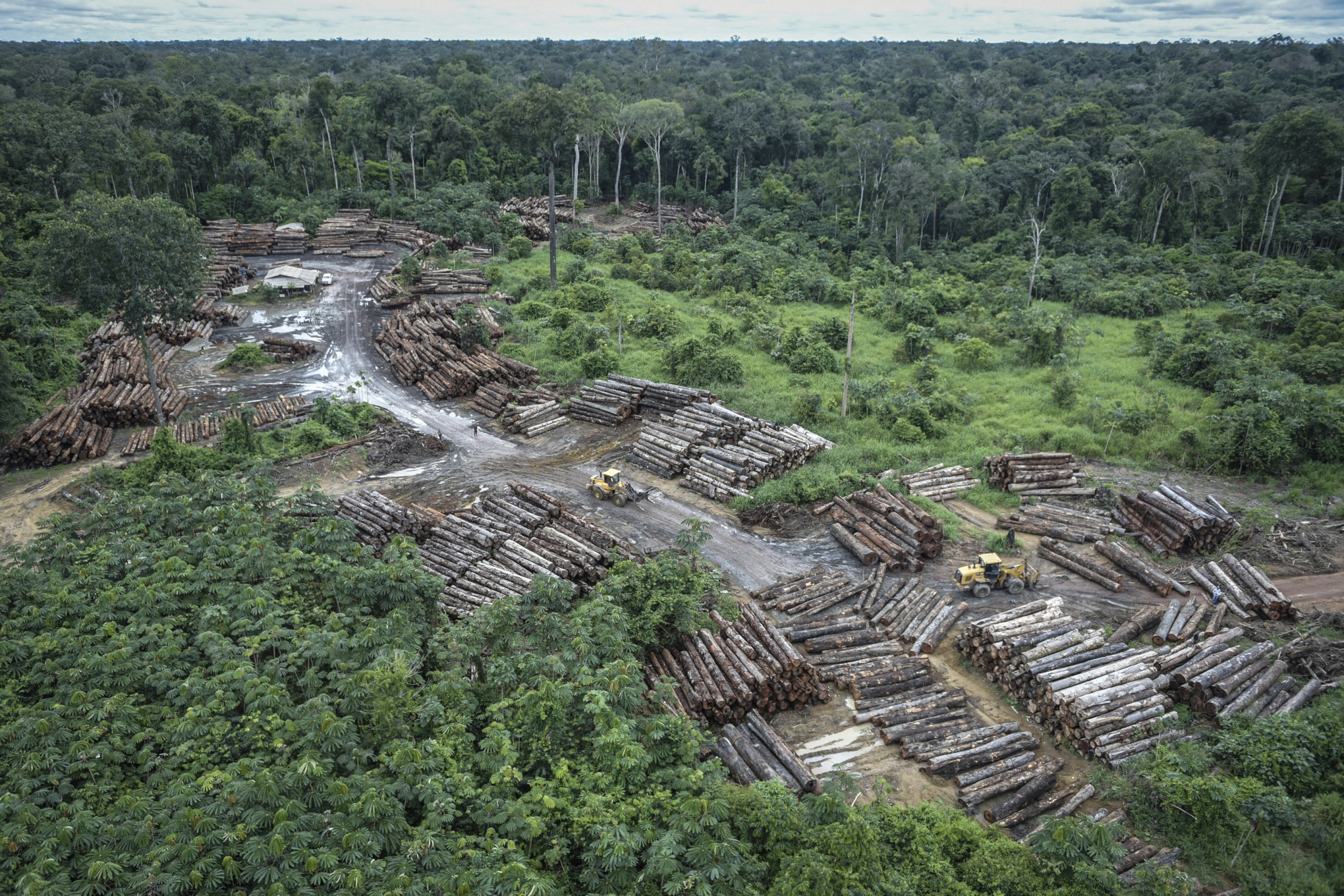 Image of an illegally deforested area on Pirititi Indigenous lands.