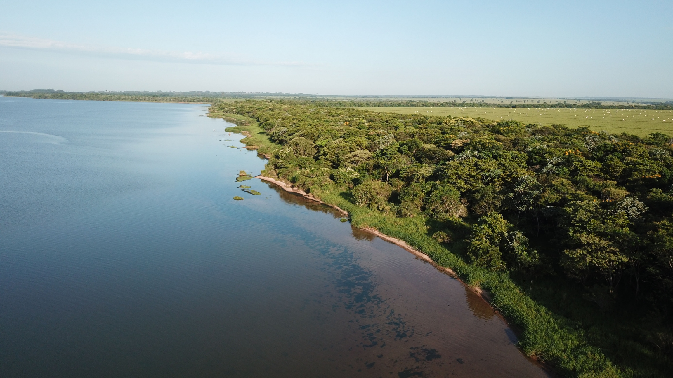 The Atlantic rainforest in Brazil is a beacon for global forest restoration.