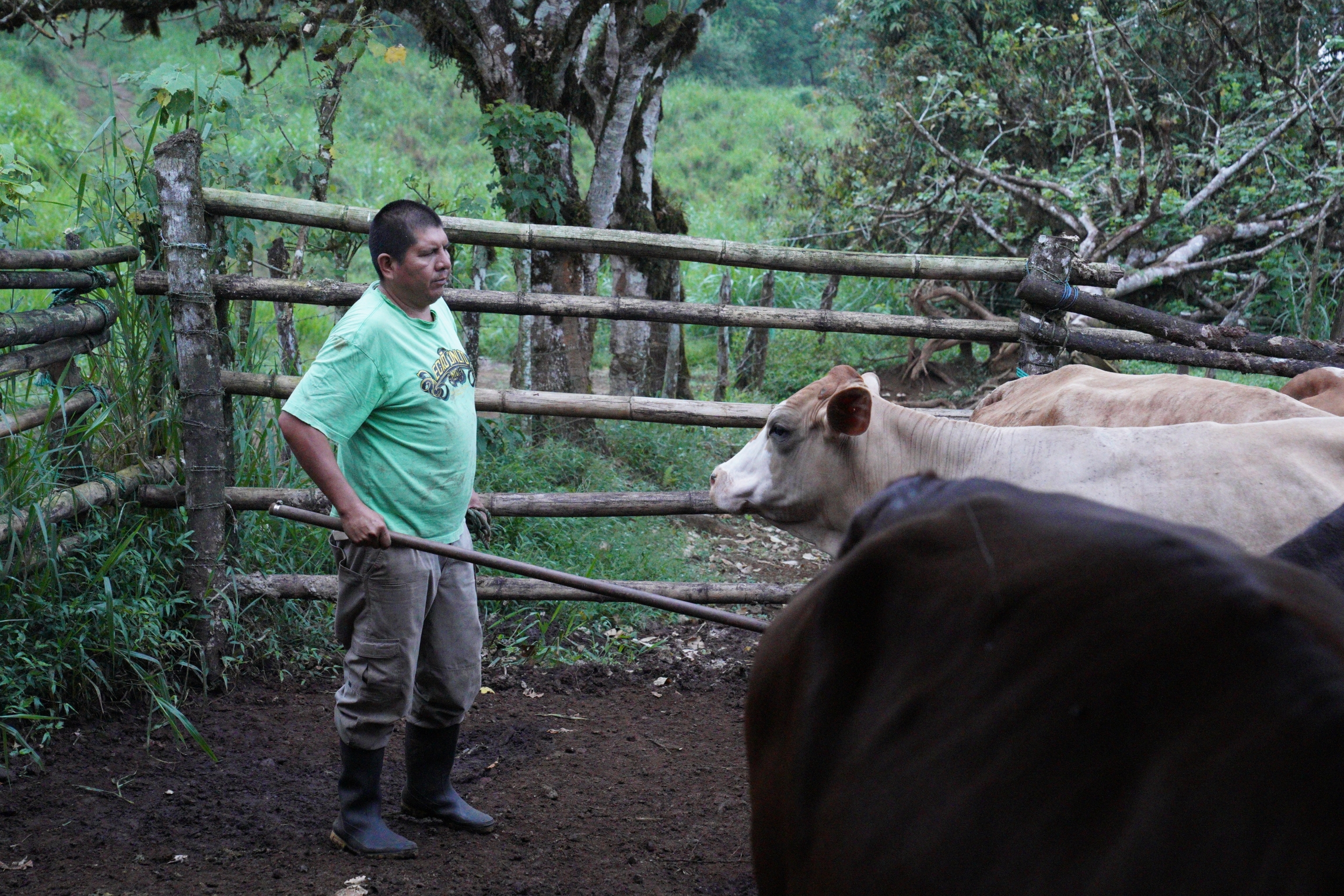 Javier Cando gets ready to milk his cows early in the morning on May 6, 2021. Due to the pandemic, Cando has had to switch from workingasa guide on the Galápagos Islands tomilking cows on his family's farm.