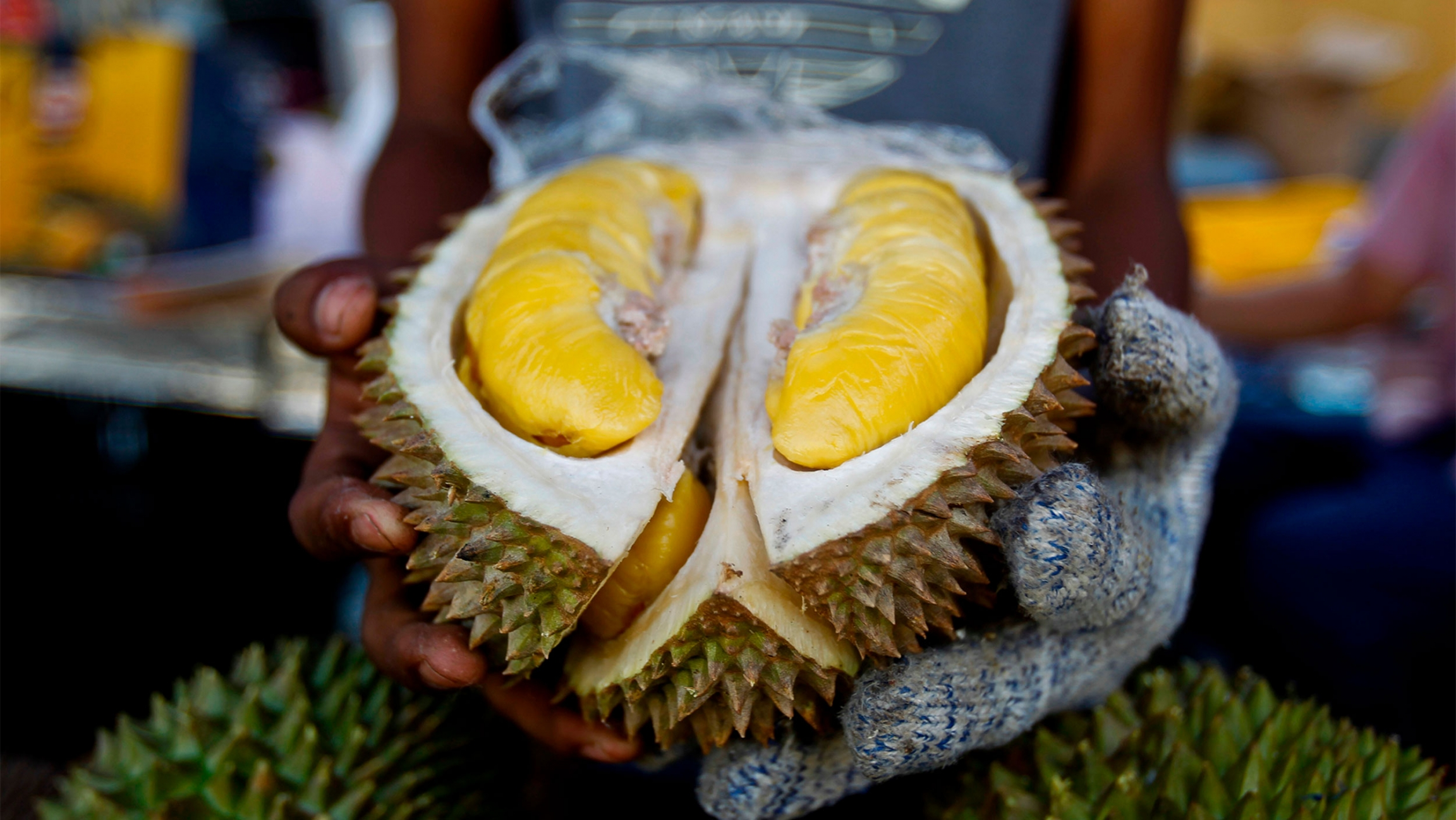 Woman wearing gloves holds out a durian fruit