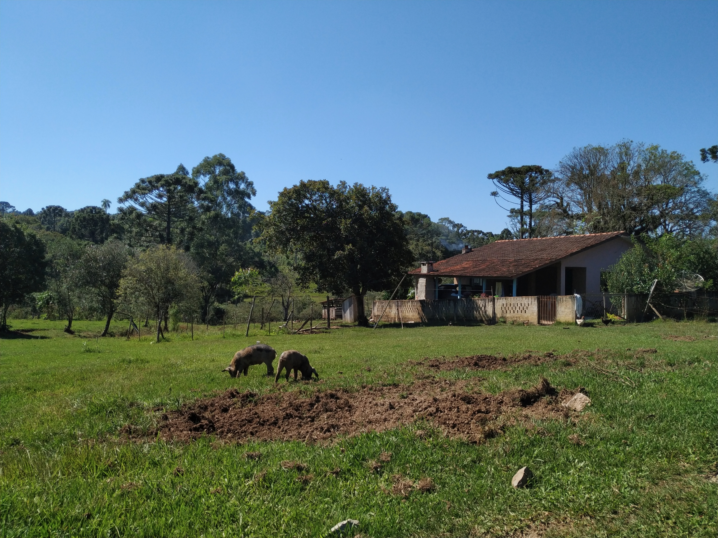 In thistraditionalfaxinal community,Marcondes, in the countryside of the Brazilian state of Paraná, residentslet their farm animals roam free on their communal lands.