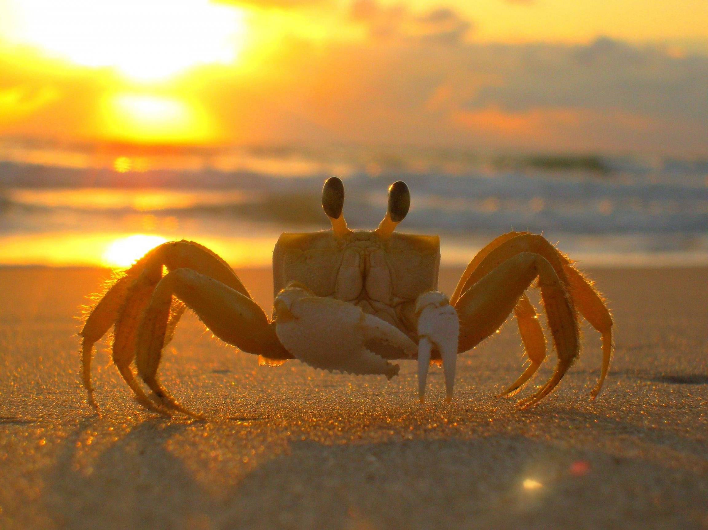 A crab during sunset.