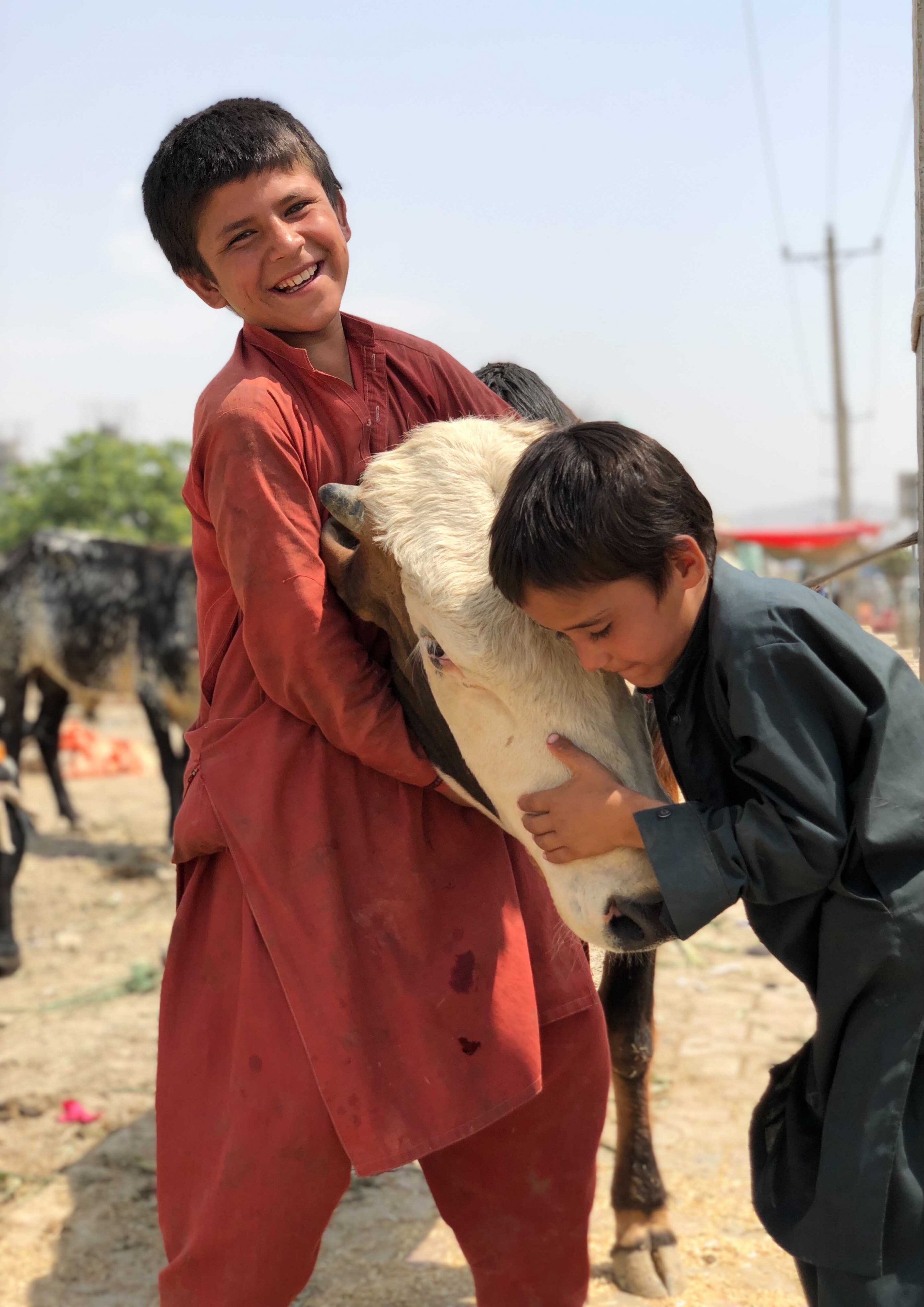 Young boys help out at an open-air livestock market in Kabul, Afghanistan. As residents celebrated Eid al-Adha (or Feast of Sacrifice) a rocket attack targeted the presidential palace.