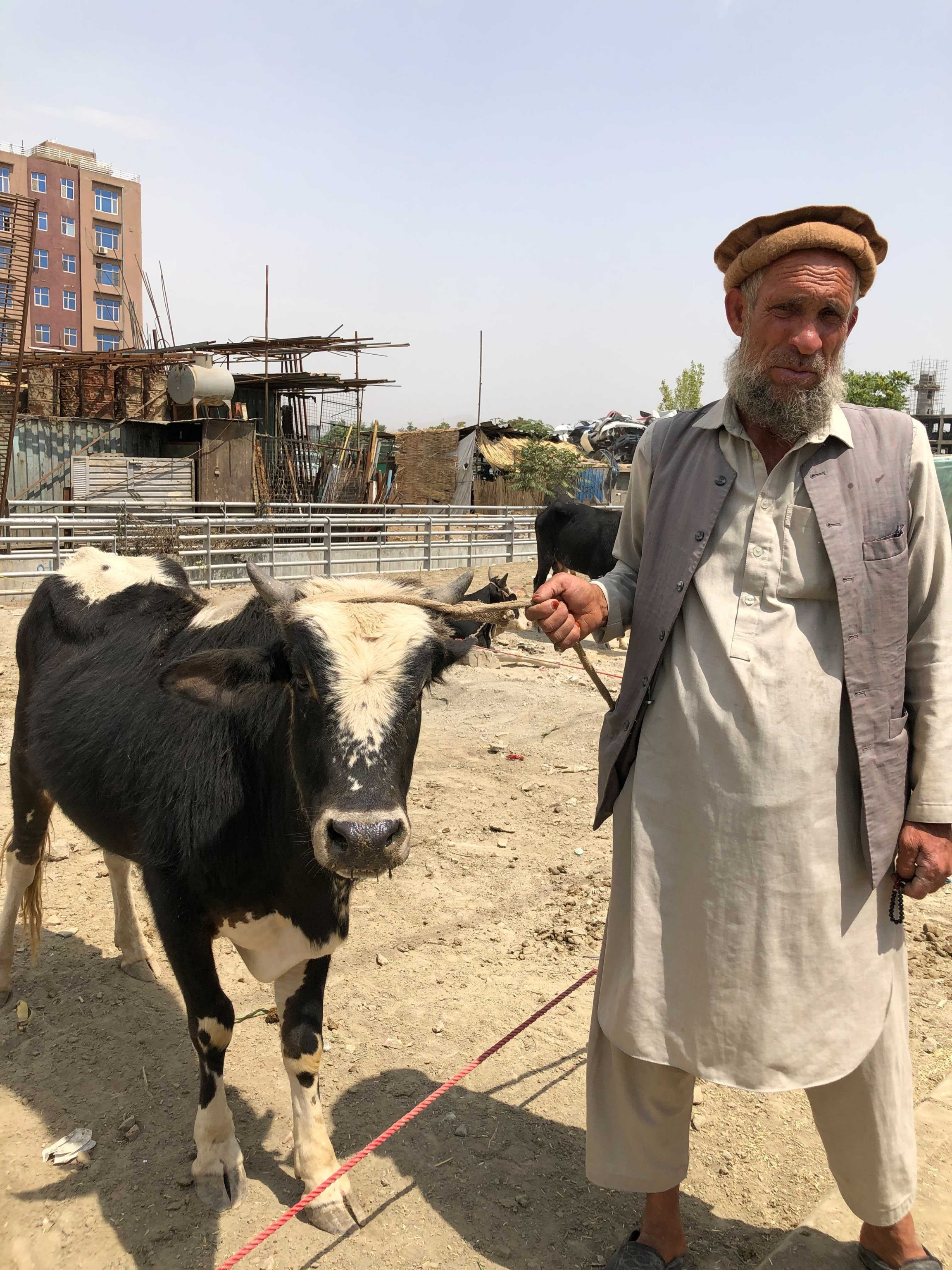 Khale Gol had to transport his cow through Taliban territory to get to Kabul. He raises them in the south, where it's cheaper, and brings them to Kabul to sell at a profit. This year, the fighting was much more intense, he says.