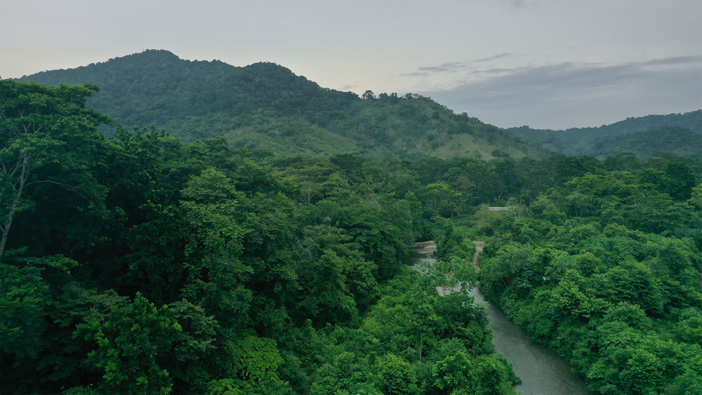 Aerial view of the green vegetation of the Darien jungle