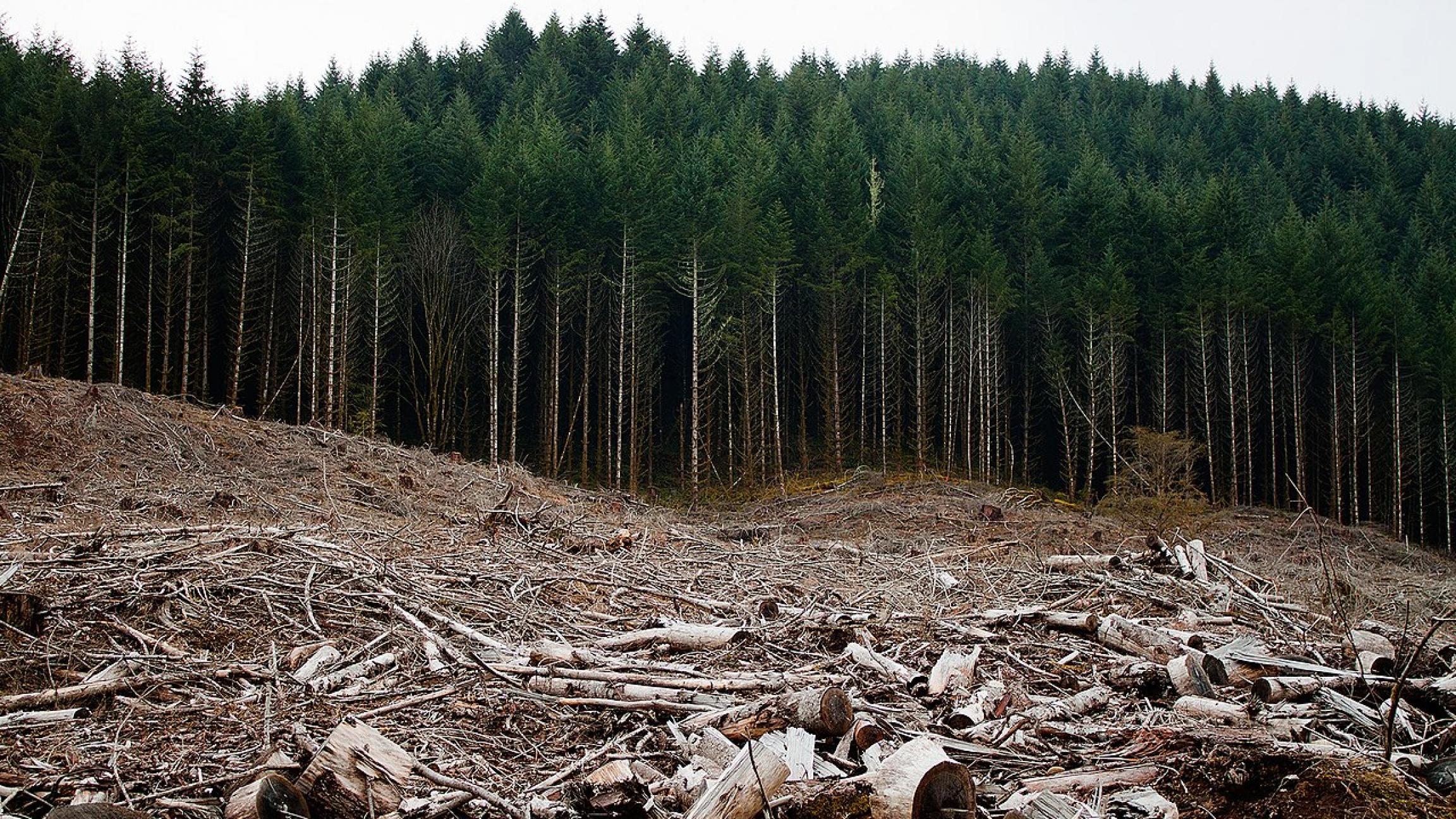 Clear-cut forest near Eugene, Oregon