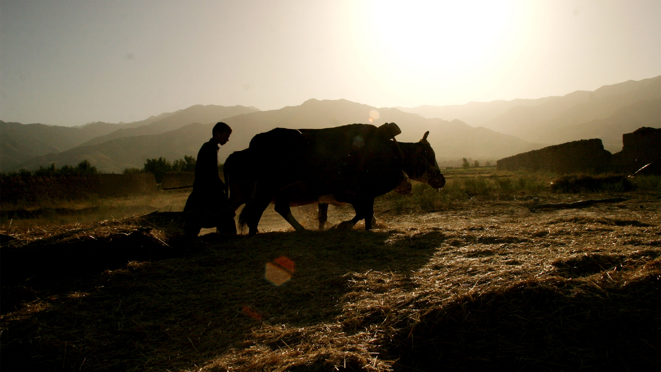 Shomali, a little north of Kabul, Afghanistan, July 18, 2005. After seven years of severe drought that impoverished farmers and made millions reliant on food handouts, Afghanistan enjoyed a bountiful harvest.