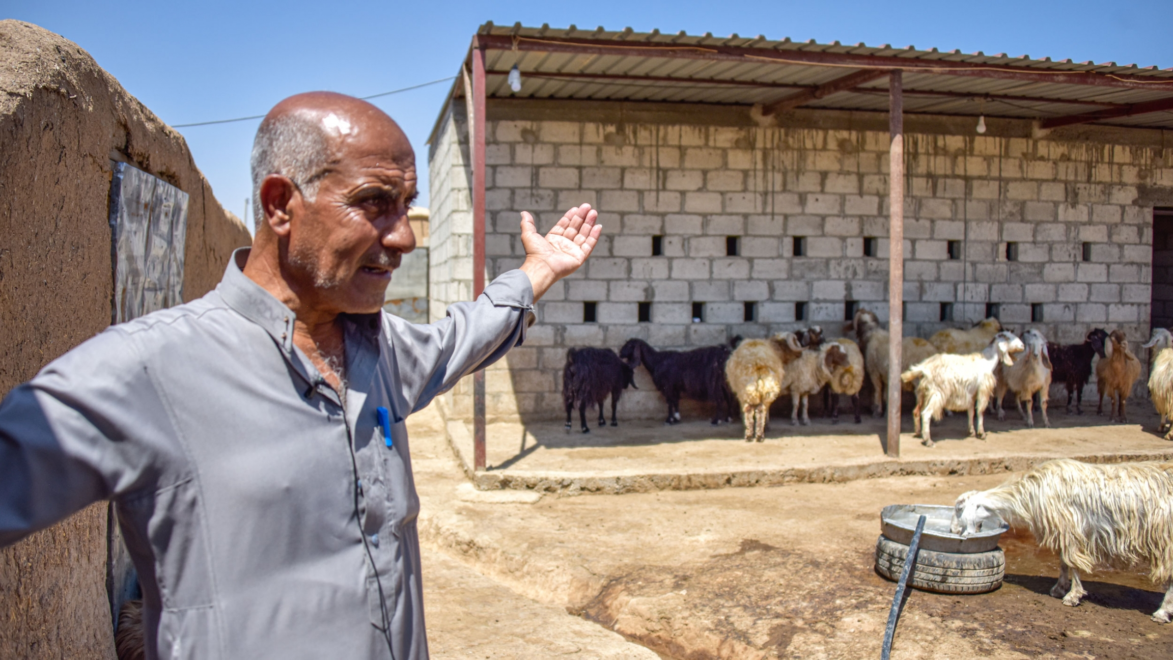 Yassin, a farmer from al-Sebat village in Rural Hasakah, standsin the yard where he keeps his livestock while explaining the catastrophic effects of drought on his life.