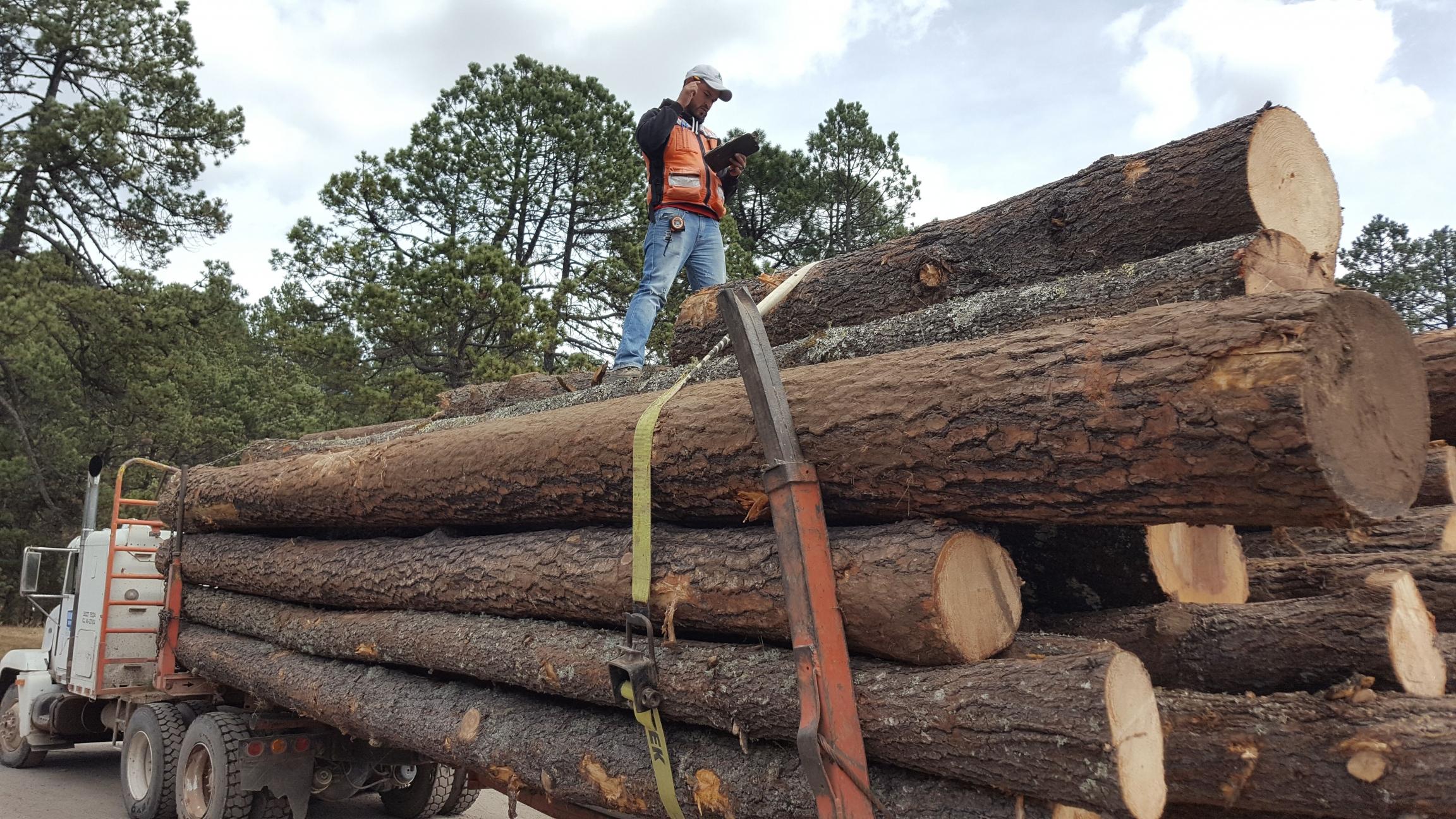 Logs loaded onto a truck