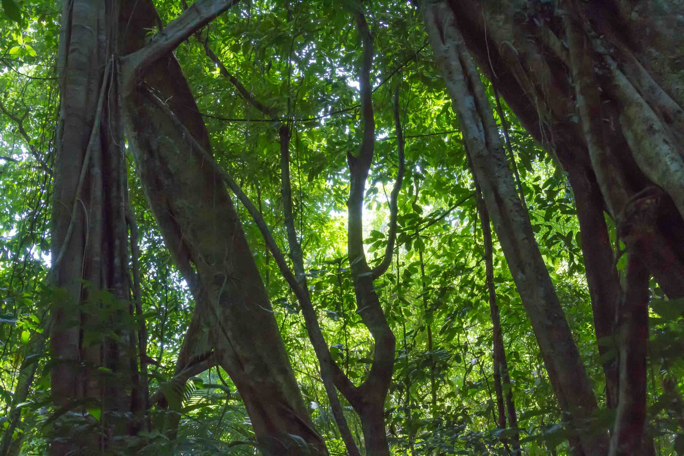 Tree trunks with vibrant green leaves
