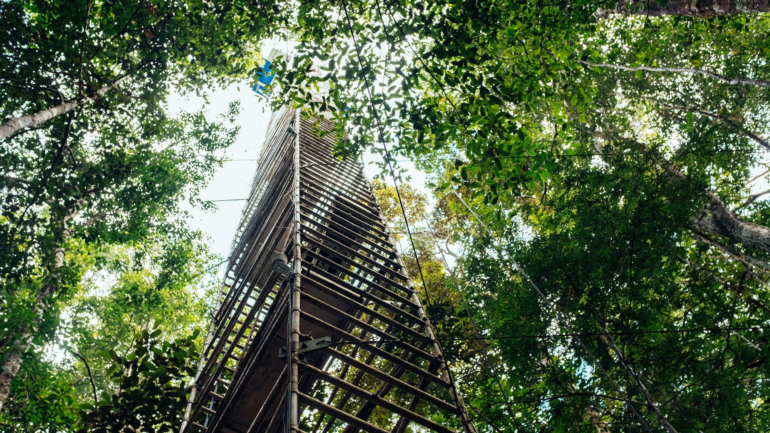 A tower of steel rises out of the dense jungle into the sky
