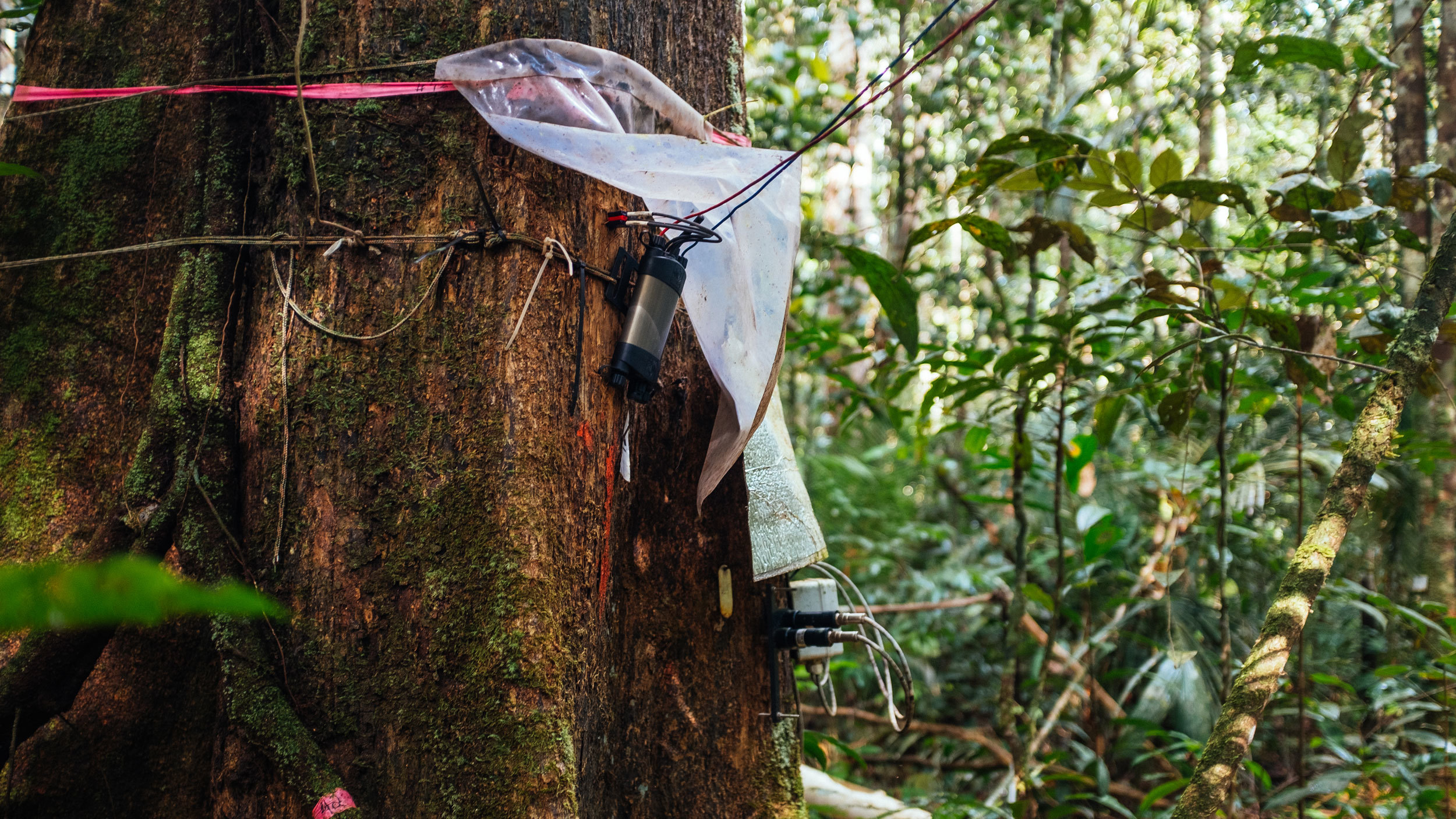 Instruments and wires are strapped to the base of a tree in the jungle.