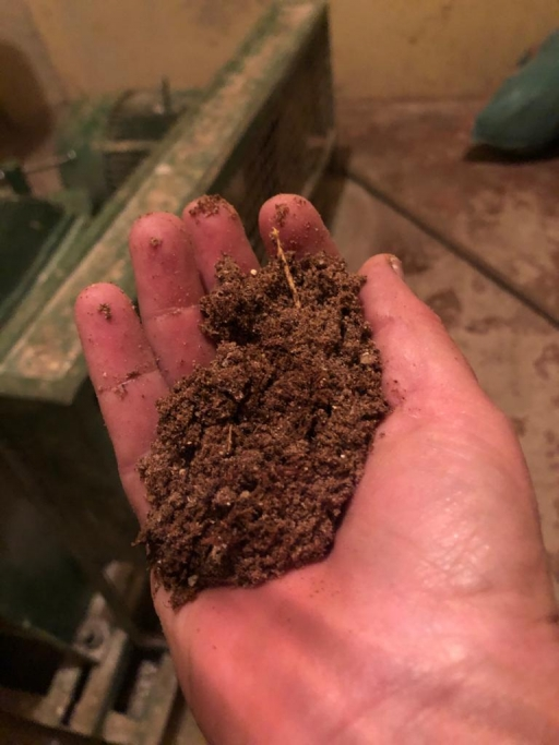 A hand holds mealy locust grinds