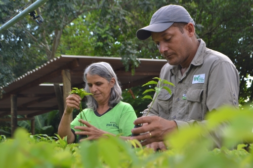 Conservation experts in the Atlantic Forest train local people to grow native plants in nurseries.