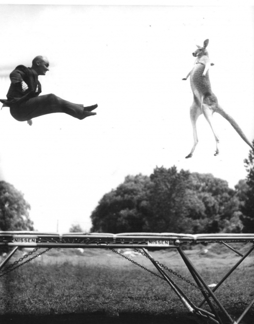 One of George Nissen's publicity stunts —jumping on a trampoline with a kangaroo.