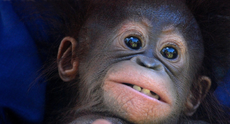 <p>A new study showed how a brain implant helped monkeys make better decisions.</p>