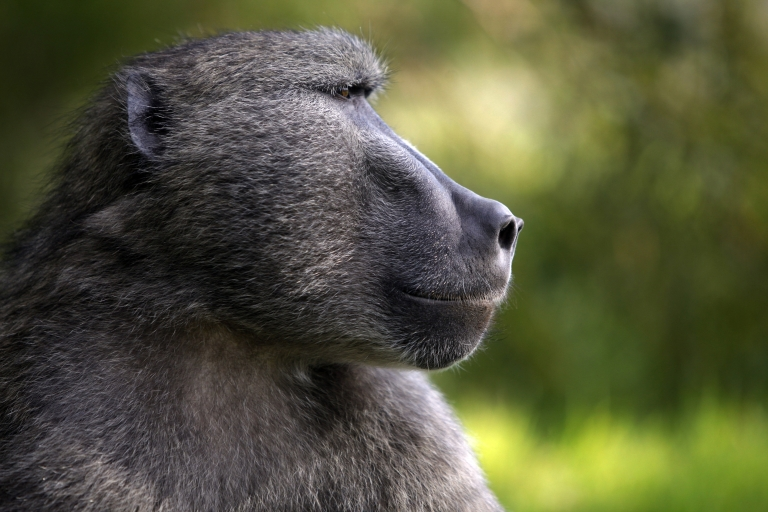 <p>A new study using monkeys found that the brain keeps its own internal timing function.</p>