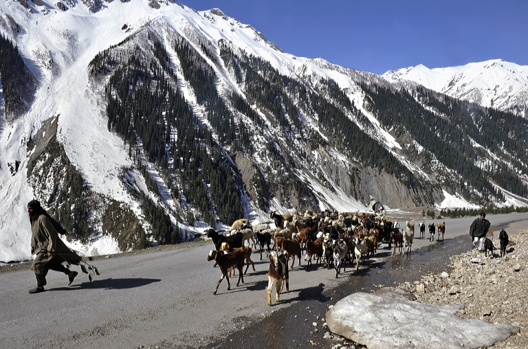 <p>Kashmiri nomads walk with their herd of goats and sheep on a mountainous road after the Srinagar-Leh highway 55 miles east of Srinagar, the capital of Indian Kashmir, May 2, 2011.</p>