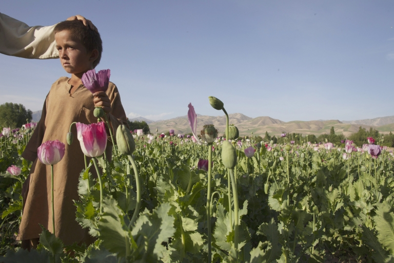 <p>Azim, 8, stands next to his father, Zarren, in their poppy field May 25, 2011, in Faizabad, Afghanistan.</p>