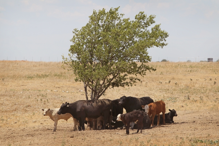 <p>Experts say that drought claimed 300 trees in Texas last year.</p>