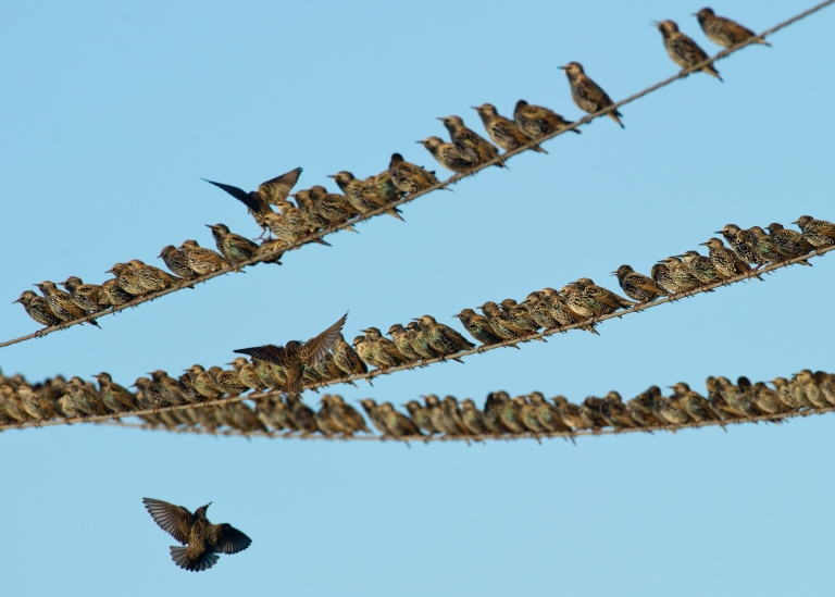 <p>Scientists say that some birds are changing their migration patterns to deal with climate change.</p>