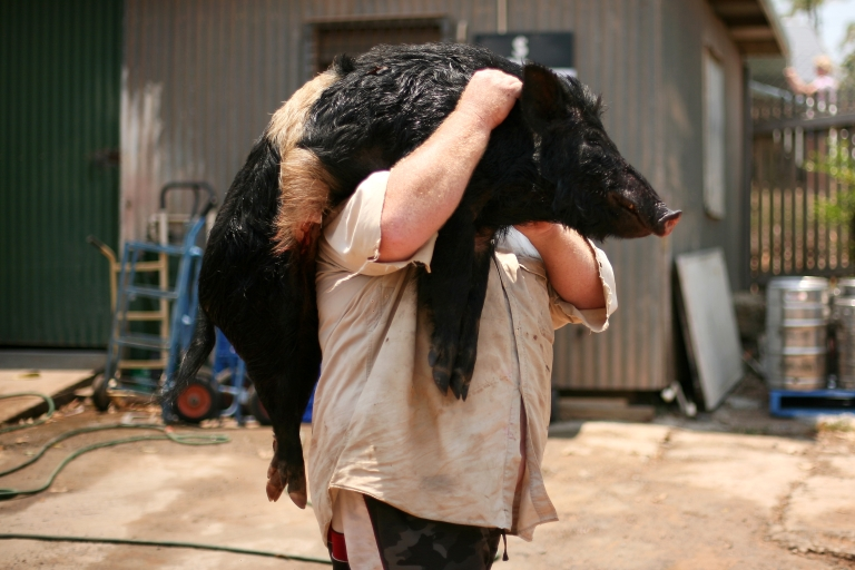 <p>The CDC has warned that swine flu may be spreading at state fairs around the country.</p>