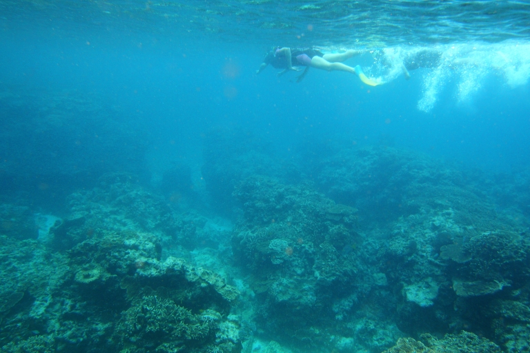 <p>Coral reefs in the Caribbean are dying off, according to a new report from environmentalists.</p>