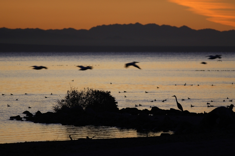 <p>Pelicans fly over a great blue heron on the shore of the Salton Sea, the biggest lake in California, on March 21, 2012.</p>