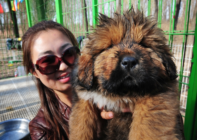 <p>A Canadian university has created a puppy room that allows stressed students to take a break to play with cute dogs.</p>