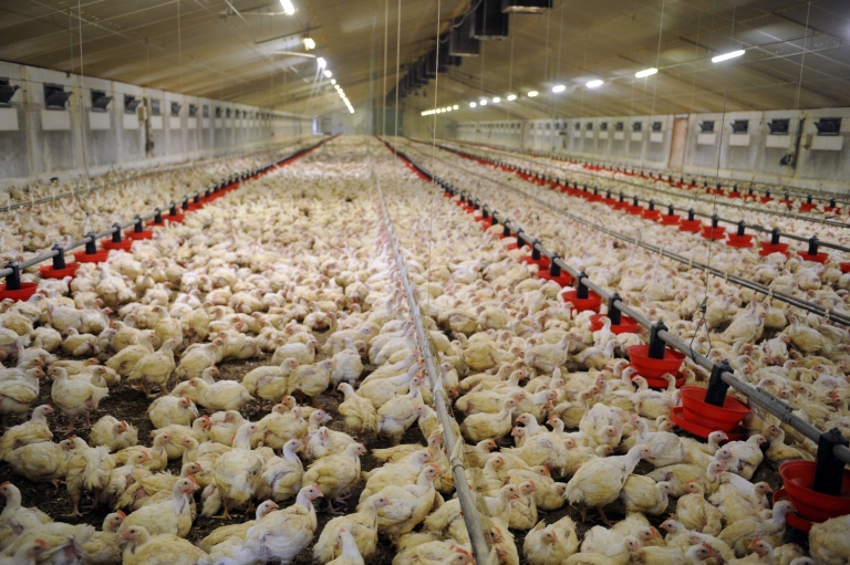 <p>Joshua D. Shelton killed 70,000 chickens following a night of binge drinking.</p>