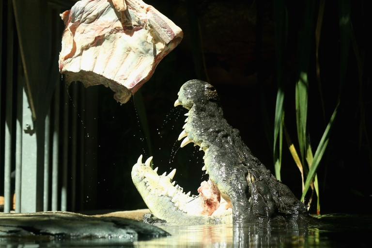<p>Crocodile jaws are more sensitive to the touch than human fingertips, a new study suggests.</p>