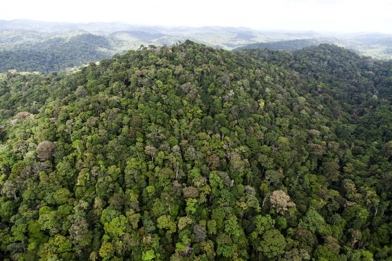 <p>The Amazon rainforest is feeling the effects of climate change through a massive drought.</p>