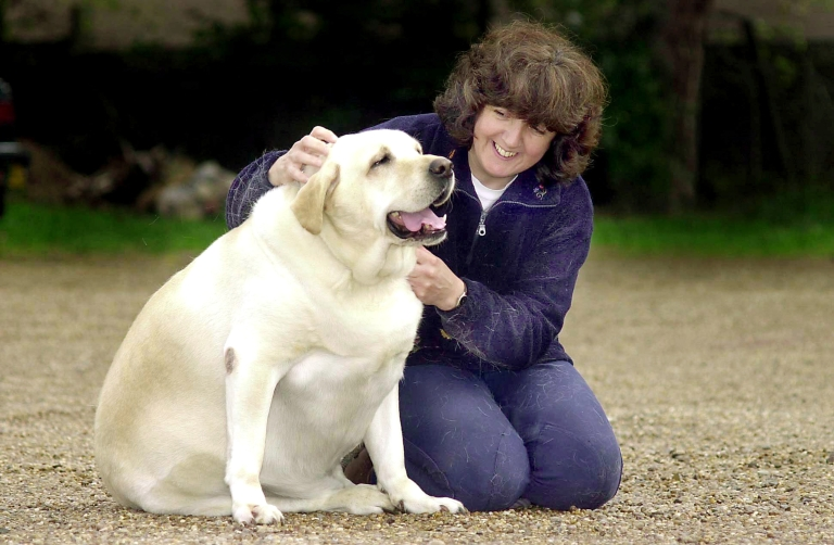 <p>America's first pet obesity clinic is opening to deal with an increasing animal fatness problem.</p>