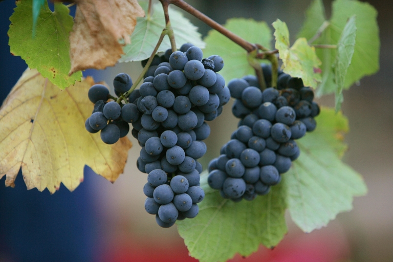 <p>A new study confirms that red wine has anti-aging properties due to the presence of chemical resveratrol.</p>