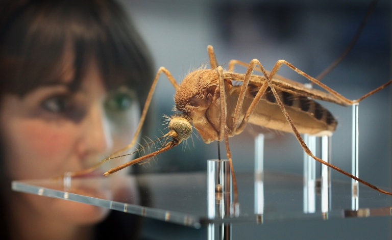<p>A British biotech firm wants to release genetically modified mosquitoes into the Florida Keys.</p>