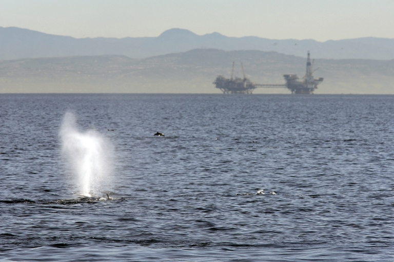 <p>Researchers say a halt on shipping traffic after the 9/11 attacks proves that whales' stress levels are heightened by ocean noise</p>