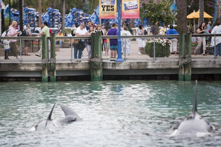 <p>Guests watch a killer whale act at SeaWorld, in Orlando, Florida, in 2010.</p>