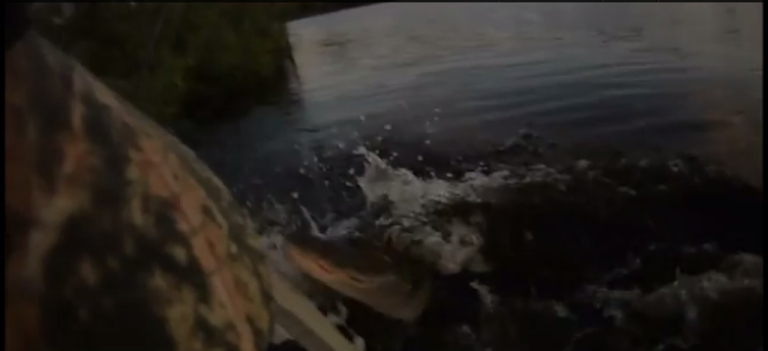 <p>An alligator jumped up at Thomas Swiader Jr. as he fished from his kayak on Triplet Lake in Casselberry, Florida.</p>