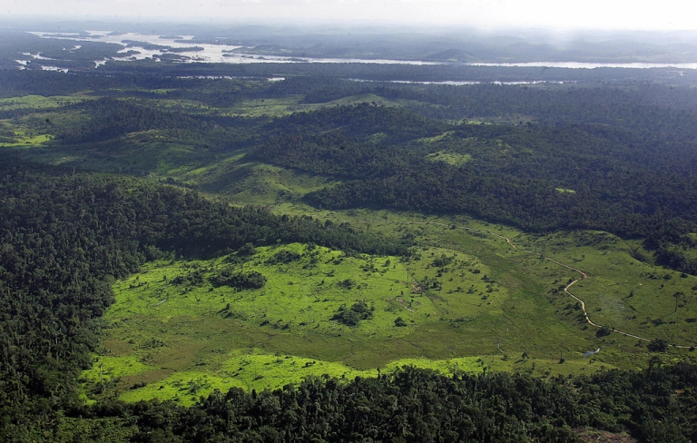 <p>Data from the Brazilian government suggests that deforestation of Brazil's Amazon rainforest skyrocketed in 2012.</p>