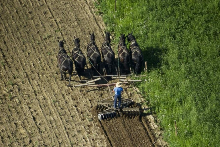 <p>An Amish farmer plows his field behind six draft horses June 2, 2011 in New Wilmington, southwestern Pennsylvania.</p>
