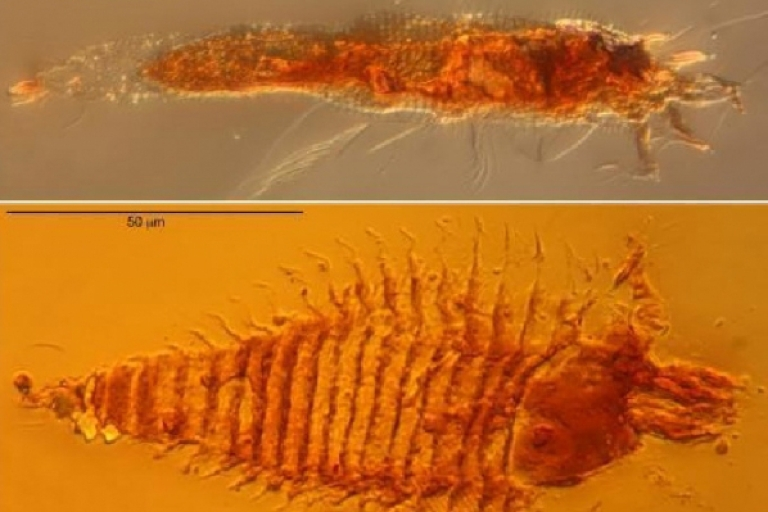 <p>The world's oldest fossils of mites were found in Italy recently and said to be about 230 million years-old.</p>