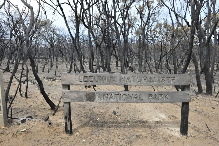 <p>The landscape is scorched following bush fires which raged throughout Prevally and Gnarabup, on November 25, 2011 in Margaret River, Australia. 4000 hectares of forest and over 30 properties have been destroyed as bush fires continue to burn around Western Australia.</p>